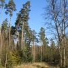 bartkow-lasy-zlotowskie-07