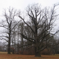 brynek-palac-drzewa