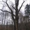 brynek-palac-park-drzewo