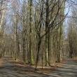 brzeg-park-wolnosci-6