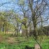 czempin-cmentarz-ewangelicki-1