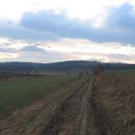 czeslawice-widok-na-muszkowicki-las-bukowy
