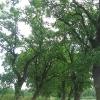 czeslawice-stawy-aleja-2