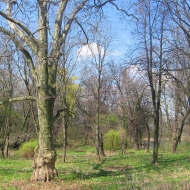 damianowo-park