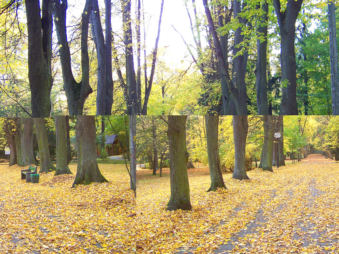 aleja-w-parku-zdrojowym