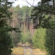droga-slupkowa-c8