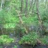 goczalkowice-zdroj-bagno
