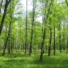 goczalkowice-zdroj-las