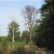 gola-wielka-lesne-stawki-14