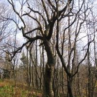 grodziec-drzewa.jpg