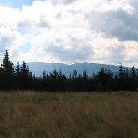 jalowiec-widok-na-babia-gora.jpg