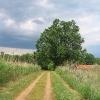 janislawice-stawy-grobla