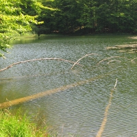 jeziorka-duszatynskie-jeziorko-gorne-3.jpg