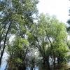 jezioro-turawskie-poludniowy-brzeg-las-2