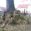 karczow-kosciol-wniebowziecia-nmp-drzewo-1