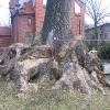 karczow-kosciol-wniebowziecia-nmp-drzewo-2