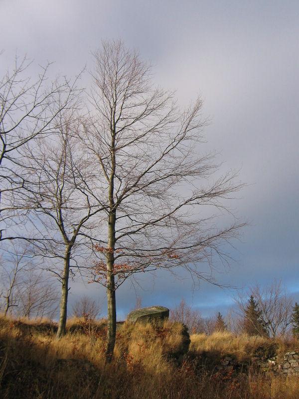 karpien-ruiny-zamku-drzewa.jpg