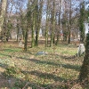kepno-cmentarz-ewangelicki-9