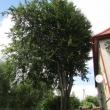 2112-walbrzych-ul-kopalniana-buk-01