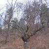 kowalska-gora-drzewo