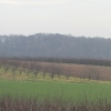 krakowiany-bolescin-8