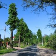 kuraszkow-aleja