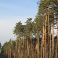 kuzniczysko-przed-3