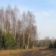 kuzniczysko-przed-4