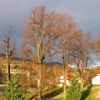 ladek-zdroj-drzewa.jpg