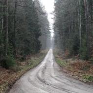 lasy-zlotowskie-01