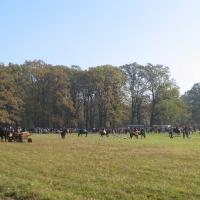 las-orli-zawody-konie-2.jpg