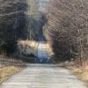 lasy-zlotowskie-zlotow-04