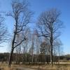 lasy-zlotowskie-zlotow-07