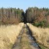 lasy-zlotowskie-zlotow-08