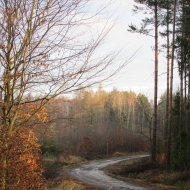 lasy-zlotowskie-05