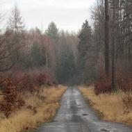 lasy-zlotowskie-07