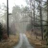 lasy-zlotowskie-10