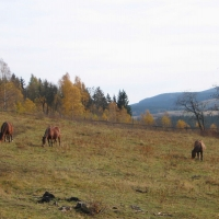 lesna-konie.jpg