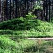 lesno-kamienne-kregi-15