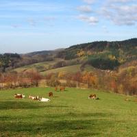 lewinska-czuba-widok-krowy-2.jpg