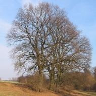 lubie-dolne-drzewa