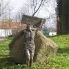 ubowice-dawny-cmentarz-resztka-krzyza