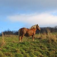 lutynia-konie-2.jpg