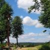 mielecin-cmentarz-ewangelicki-3