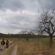 mienice-widok-na-lesiste-wzgorza