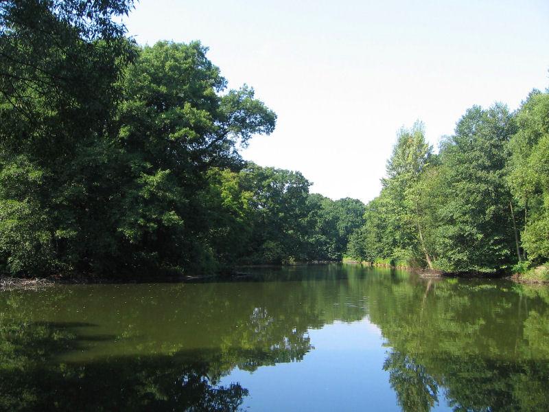 milicz-park-staw-2.jpg