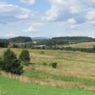 mniszek-os-grunwaldzkie-05