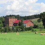 mniszek-os-grunwaldzkie-10