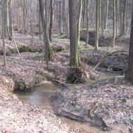 muszkowicki-las-bukowy-zameczny-potok-1