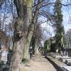 nowe-zagrody-cmentarz-aleja